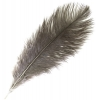 """Ostrich Drab Feathers 6-8"""" Premium Quality Natural"""